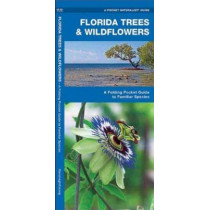 Florida Trees & Wildflowers: A Folding Pocket Guide to Familiar Species by James Kavanagh, 9781583550885