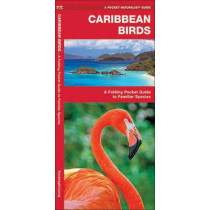 Caribbean Birds: A Folding Pocket Guide to Familiar Species by James Kavanagh, 9781583551585