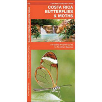 Costa Rica Butterflies & Moths: A Folding Pocket Guide to Familiar Species by James Kavanagh, 9781583553404