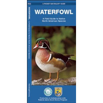 Waterfowl: A Field Guide to Native North American Species by James Kavanagh, 9781583556382