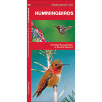 Hummingbirds: A Folding Pocket Guide to Familiar Species by James Kavanagh, 9781583557914