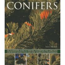 Conifers by Andrew Mikolajski, 9781780192635