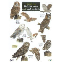 Guide to British Owls and Owl Pellets by Leanne Thomas, 9781851532353
