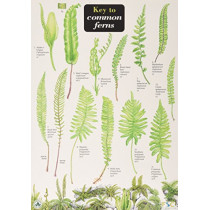 Key to Common Ferns by James Merryweather, 9781851532902