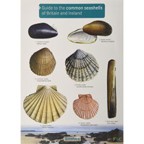 Guide to the Common Seashells of Britain and Ireland by Field Studies Council, 9781908819062