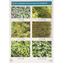 Guide to Mosses and Liverworts of Woodlands by Martin Godfrey, 9781908819178
