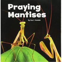 Praying Mantises by Lisa J. Amstutz, 9781474747820