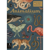 Animalium by Jenny Broom, 9781787411647