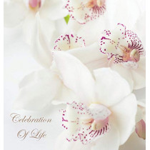 Celebration of Life, in Loving Memory Funeral Guest Book, Wake, Loss, Memorial Service, Love, Condolence Book, Funeral Home, Missing You, Church, Thoughts and in Memory Guest Book (Hardback) by Lollys Publishing, 9781912641512