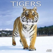 Tigers 2021 Wall Calendar by Avonside Publishing Ltd, 9781839410345